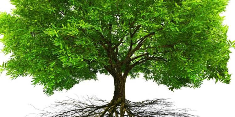 tree3-1