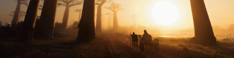 cropped-oxcart-baobab-trees-madagascar-by-marsel-van-oosten-s.jpg